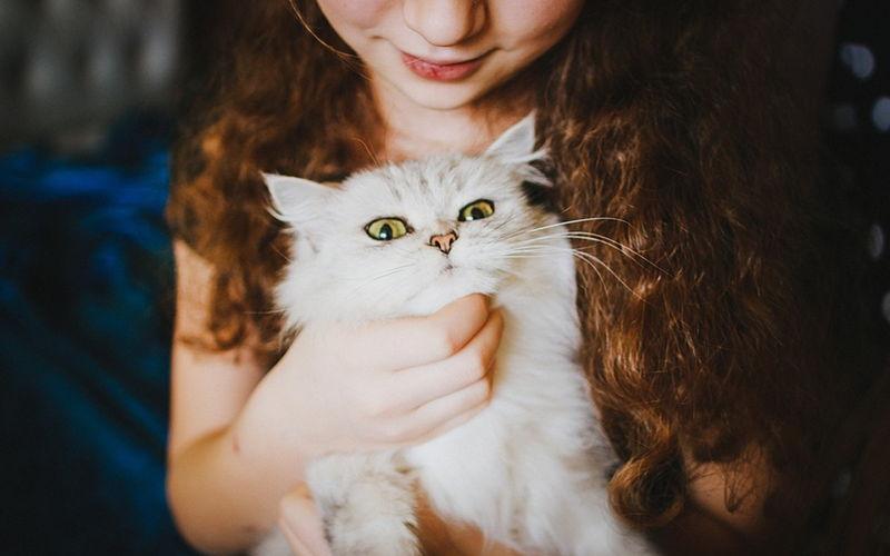Kołtuny u kotów