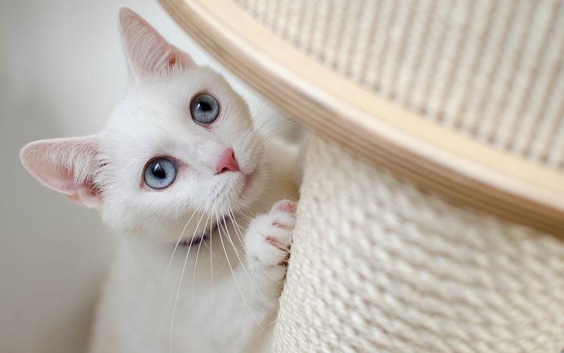Sizalowe drapaki dla kotów