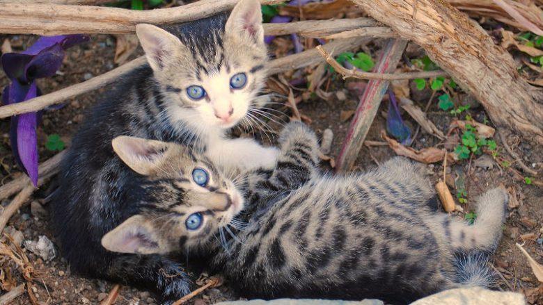 Więzi rodzinne u kotów