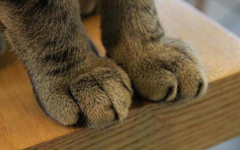 Dlaczego koty mają chowane pazury?