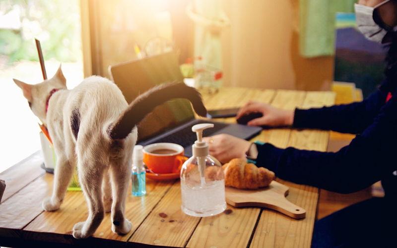 Dlaczego lepiej jest nie mieć kota?