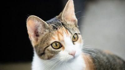 Jak czytać etykiety karm dla kotów – część 3