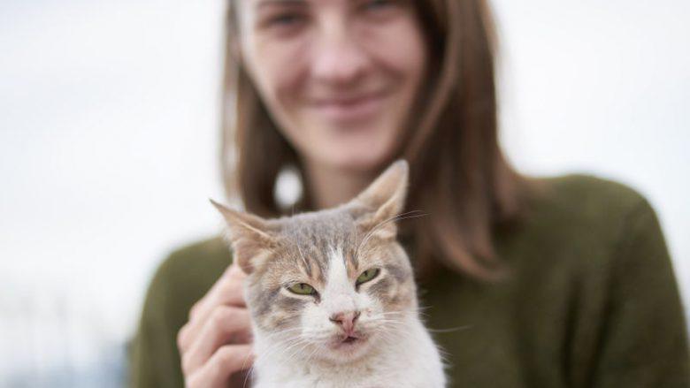 Adopcja kota – Procedury adopcyjne w fundacjach i schroniskach