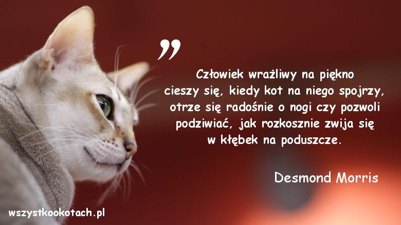 Cytaty o kotach - Desmond Morris