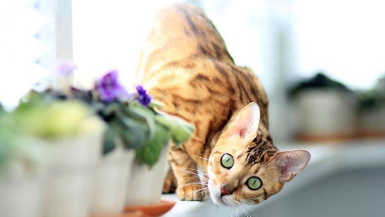 Jaką karmę dla kota wybrać?