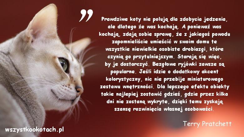 Cytaty o kotach - Terry Pratchett