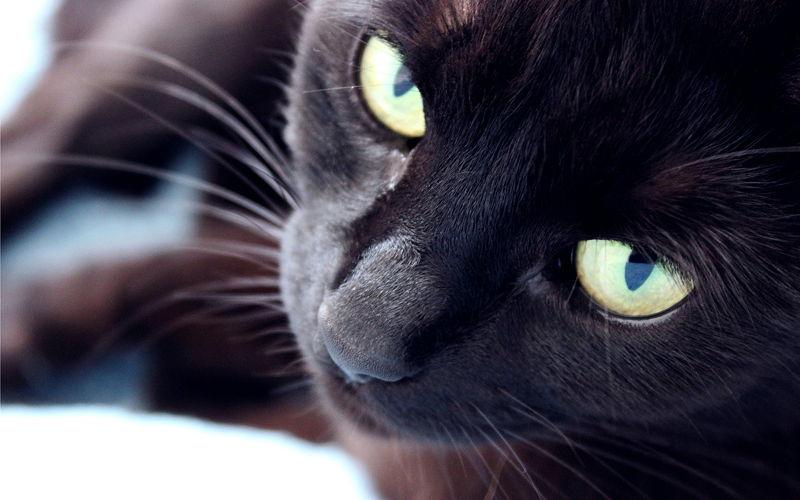 Dlaczego koty lubią leżeć na telewizorach?