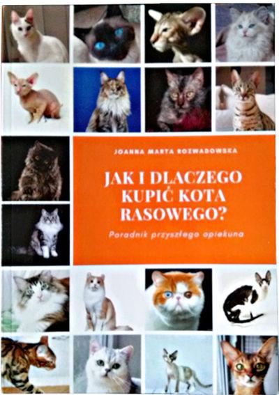 Jak idlaczego kupić kota rasowego? - Czyli wszystko, co powinien wiedzieć przyszły opiekun rasowego futrzaka